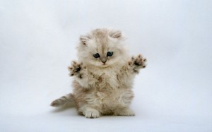 Kitty got Jazz hands! all life is precious, instead of eating an animal adopt one.