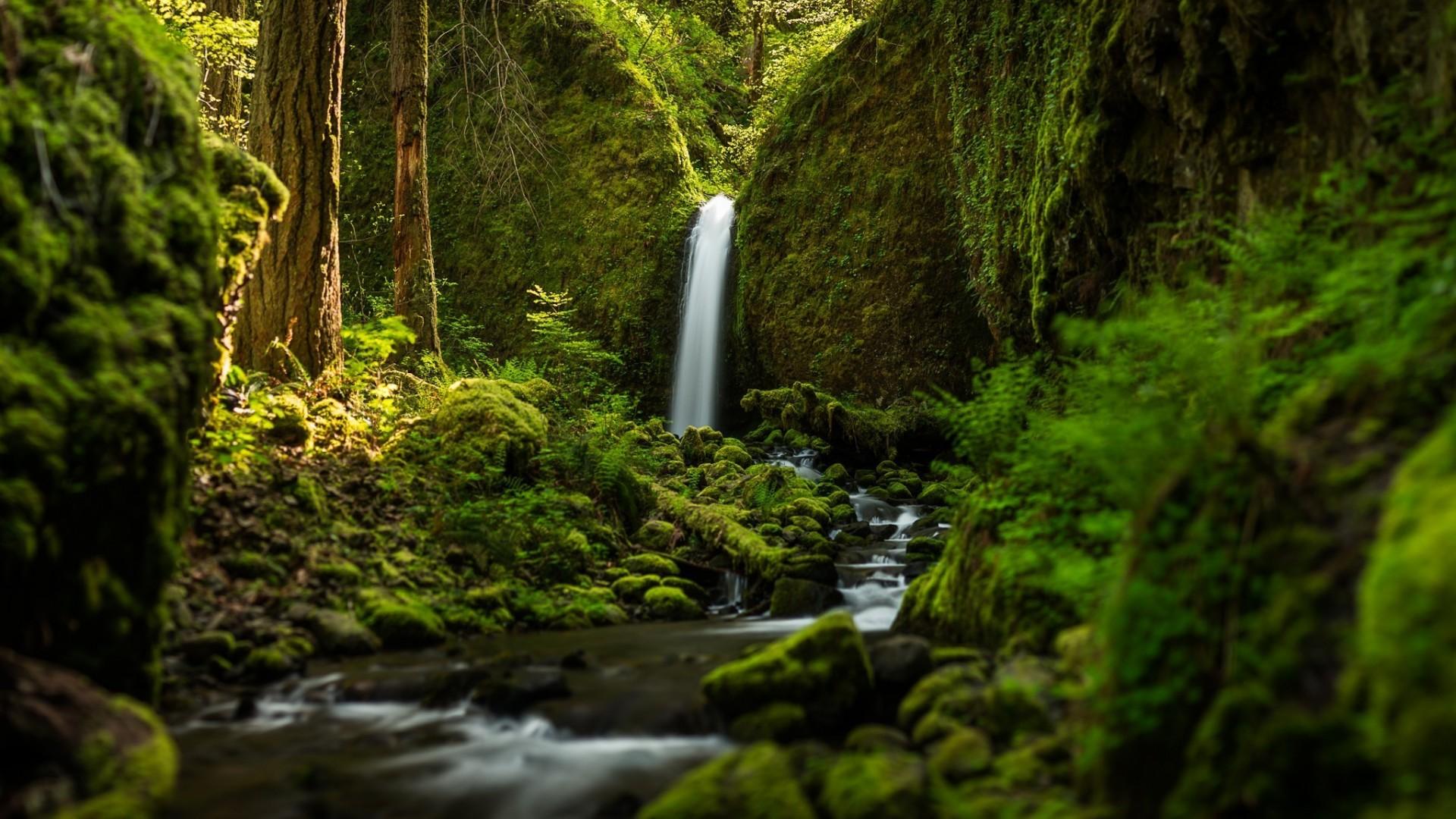 Nature forests oregon waterfalls ruckel creek falls - Oregon nature wallpaper ...